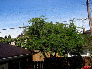 bees take flight