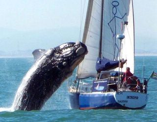 Ht_whale_onto_boat_100721_ssh