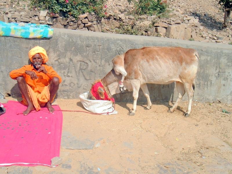 5legged_cow